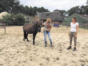 Puur met Paarden